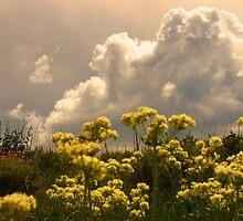Thunderhead Rising. by JoAnn Glennie