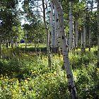 Tree Spot by Marc Cram