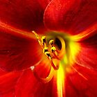 Red, Red Lily by Erica Corr