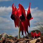 Swainsona Formosa - Sturt's Desert Pea by Rosalie Dale