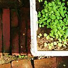 Grow- pot of green on brick walkway by homemadeinchina
