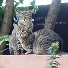 Two of my cats. by Annabella