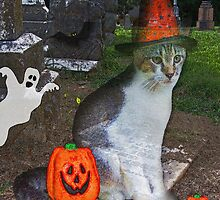Ghost Cat by Terri Chandler