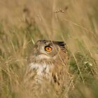 Eagle Owl by Matthew Walters