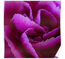 Secrets of a Carnation Poster