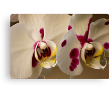 Orchids Close-up Canvas Print