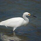 Hunting Egret - Heron  by loiteke