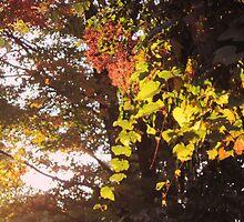 Seasons of New Beginnings by teresa731