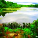 Pachaug Pond, Griswold, CT by Debbie Robbins