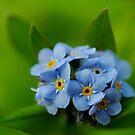 Soft and Blue by Joe Mortelliti
