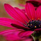 Purple Daisy by Joe Mortelliti