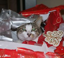 A Cat for Christmas Anyone? by snapulyndele