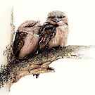 Tawny frogmouths by Laura Grogan