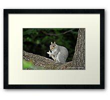Successful Squirrel Framed Print