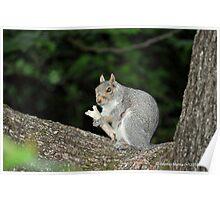 Successful Squirrel Poster