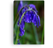 Bluebell  (Spring) Canvas Print