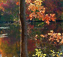 Autumn Light by Susan R. Wacker