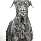 Dobermann ( brown) by Istvan froghunter