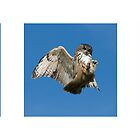 Eagle Owl Triptych by Matthew Walters