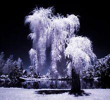 Magical Tree by Ethem Kelleci