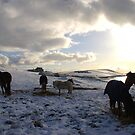 Winter Ponies by Anita Orheim