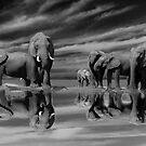 The Addo Elephants by Mugsy
