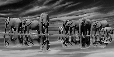 The Addo Elephants by Mugsy