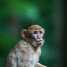Teenage Monkey, Born last year 2009 by Elaine123