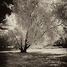 Moonlight on a Tree by Liam Diamond