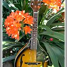 The Mandolin by Chris Coetzee
