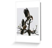 Hornbill Courtship Greeting Card