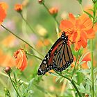 Butterfly in Wild Flower Meadow by laurie13
