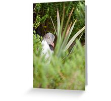 Shy Penguin Greeting Card