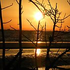 Sunset in the Trees by Rosalie Scanlon