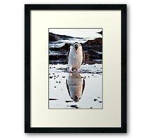 Downcast Penguin - New Zealand Framed Print