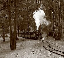 Puffing Billy, Victoria by Fiona Kersey