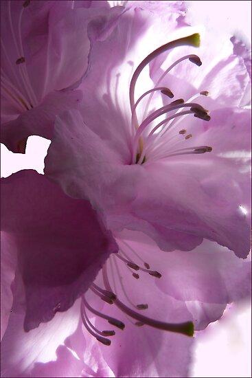 A beautiful light by © Pauline Wherrell