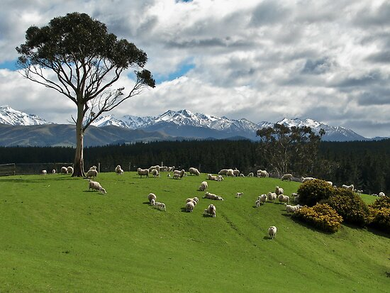 Southland New Zealand  City new picture : Kimball Chen › Portfolio › Southland, New Zealand