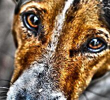 Monty by stevekellyphoto