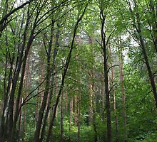 Forest by Anina Arnott