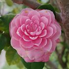 Camellia in Pink by Gregory John O&#x27;Flaherty