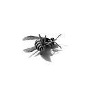 wasp 01 by andrew j wrigley