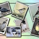 My Collage of Birds... by Qnita