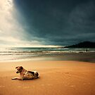 Dog day afternoon by Vikram Franklin