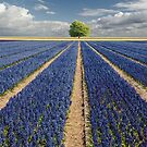 Hyacinths & Tree by LarsvandeGoor