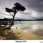 Moruya Sanctuary by Malcolm Katon