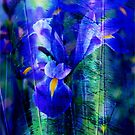 Blue Iris by Susanne Van Hulst
