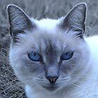 Blue Eyes by LinneaJean