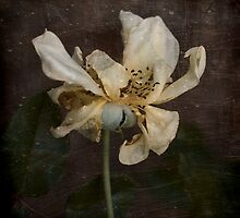 Rust 'n Roses ~ No 17 by Rosalie Dale