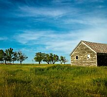 """Northern Shelter Belt"" -  McIntosh County, North Dakota by jscherr"